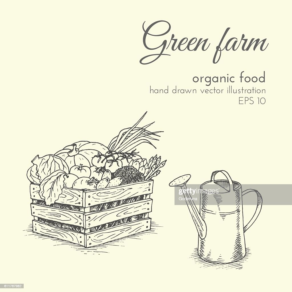 vector illustration of organic products. sketch farmer eco harvest vegetables