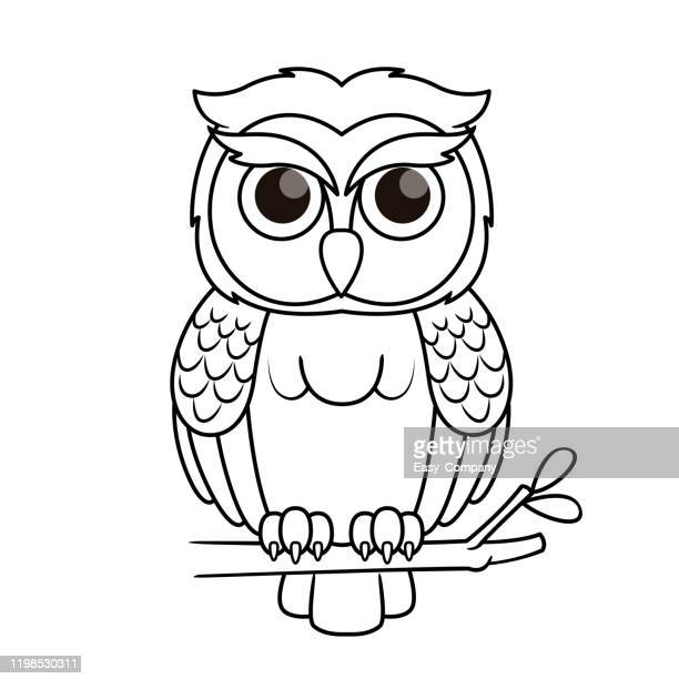 vector illustration of owl isolated on white background. for kids coloring book. - owl stock illustrations