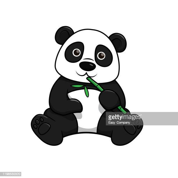 vector illustration of panda isolated on white background. - giant panda stock illustrations