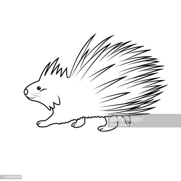vector illustration of porcupine isolated on white background. for kids coloring book. - scavenging stock illustrations