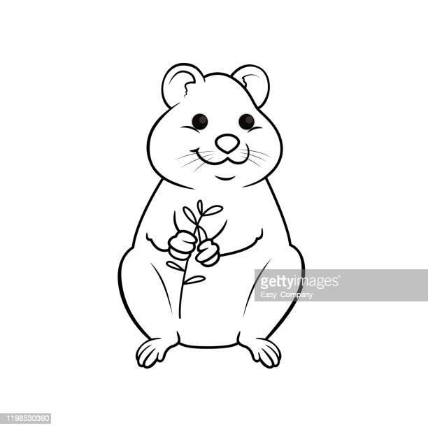 illustrations, cliparts, dessins animés et icônes de illustration de vecteur de quokka d'isolement sur le fond blanc. pour les enfants livre de coloriage. - quokka