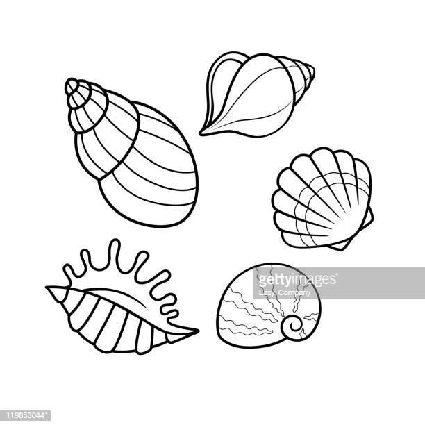 ilustraciones, imágenes clip art, dibujos animados e iconos de stock de ilustración vectorial de conchas marinas aisladas sobre fondo blanco. para niños libro para colorear. - concha de mar