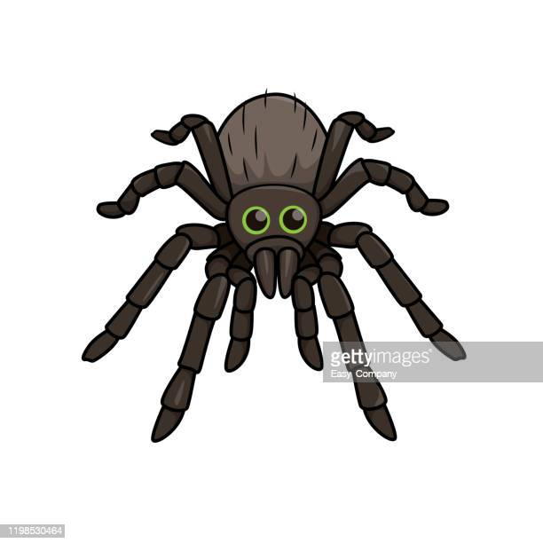 vector illustration of spider isolated on white background. - spider stock illustrations