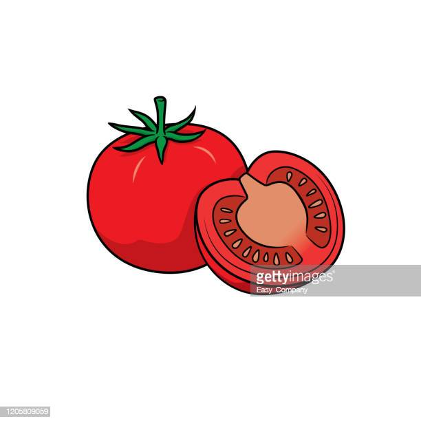 vector illustration of tomato isolated on white background. - exercise book stock illustrations