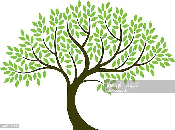 vector illustration of tree on white background - tree roots stock illustrations, clip art, cartoons, & icons