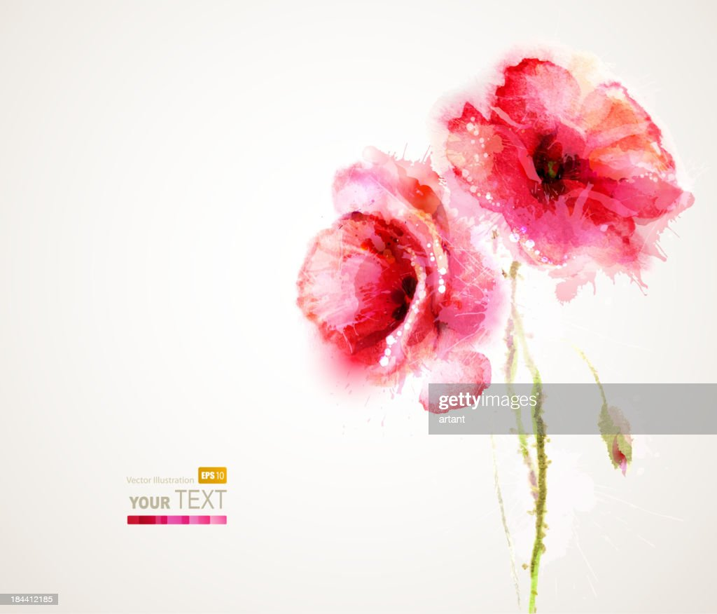 Vector illustration of two flowering red poppies