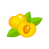 Vector illustration of two white ripe cherries with seed & leaves. Flat icon  of organic fresh berries. Isolated object
