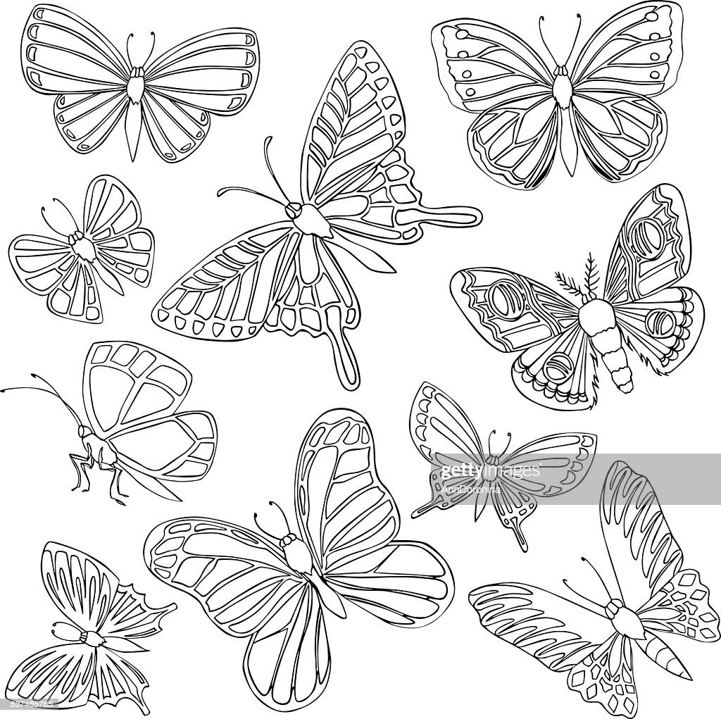 vector illustration of various butterflies