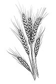 Vector illustration of wheat.