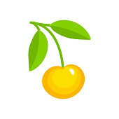 Vector illustration of white ripe cherry with stem & leaves. Flat icon of fresh berry. Isolated object