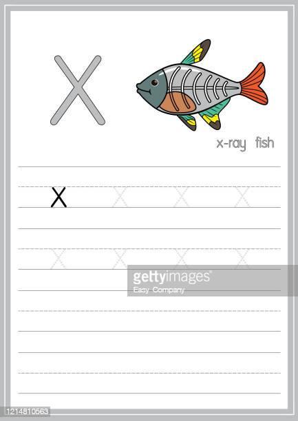 印刷準備ができてa4用紙サイズで練習abcをトレースすることを学ぶ子供のためのアルファベット文字x小文字付きx線魚のベクトルイラスト。 - x ray image点のイラスト素材/クリップアート素材/マンガ素材/アイコン素材