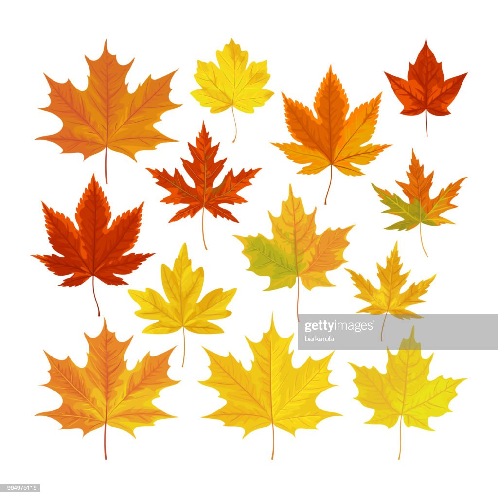 Vector illustration, set of realistic autumn leaves.