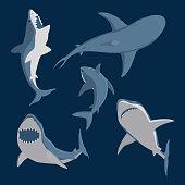 Vector illustration toothy swimming angry shark animal sea fish character underwater cute marine wildlife mascot