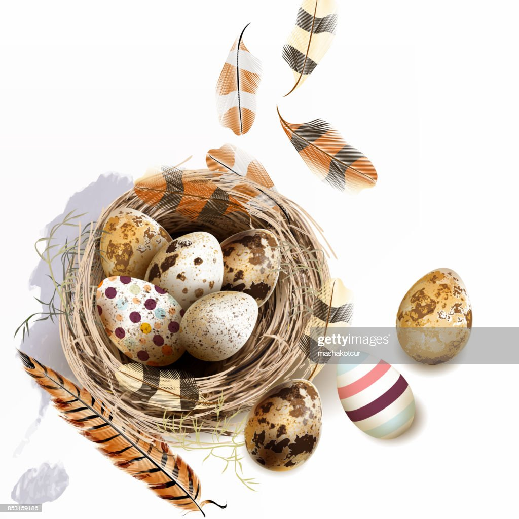 Vector illustration with Easter eggs bird nest feathers in vintage style