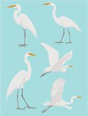 Vector illustrations of a heron in various poses