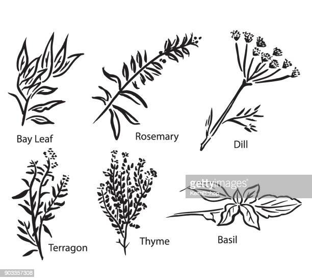 Vector Illustrations of Various Spices or Herbs