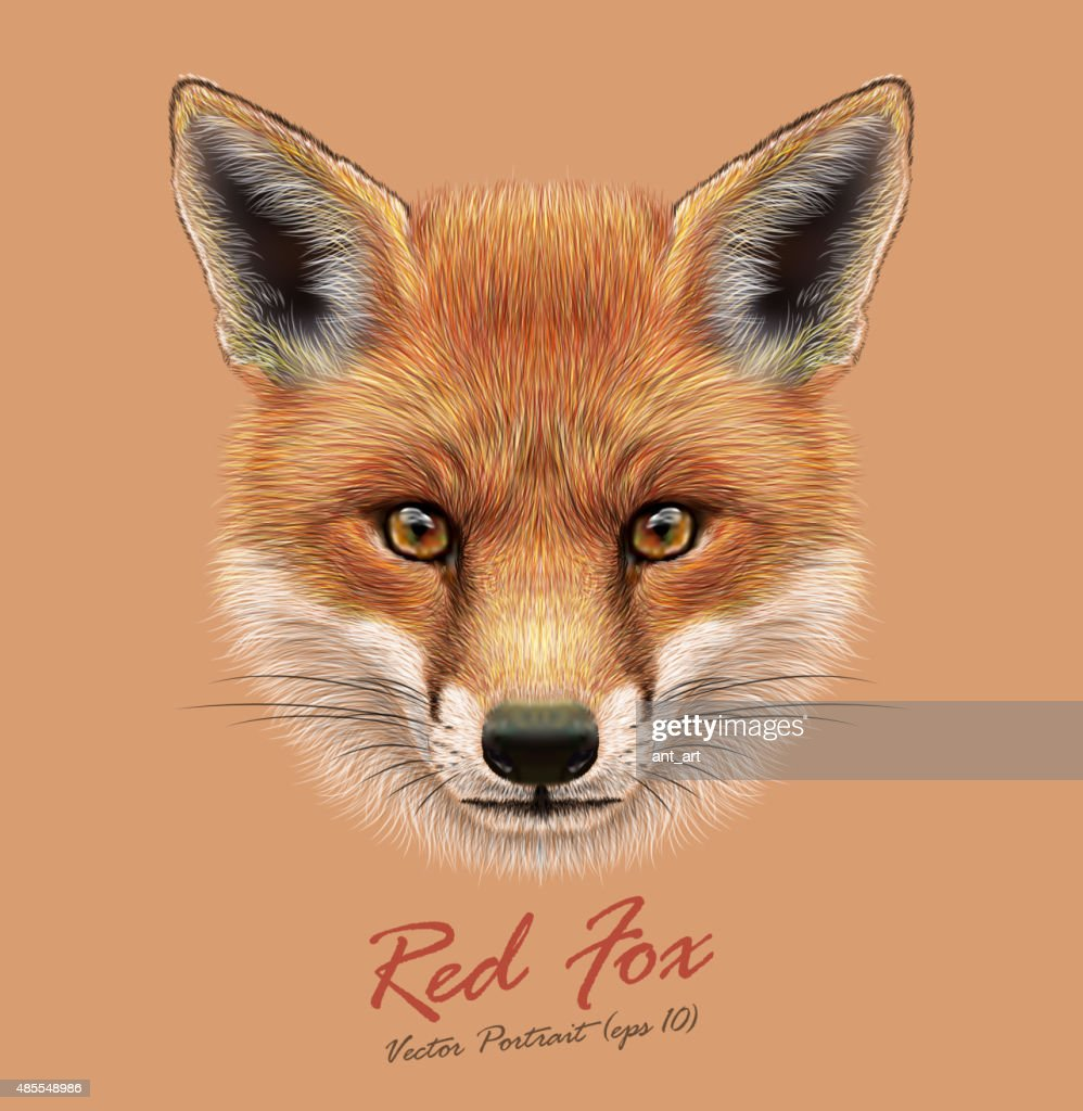 Vecteur Dillustration Portrait Dun Renard Roux Illustration