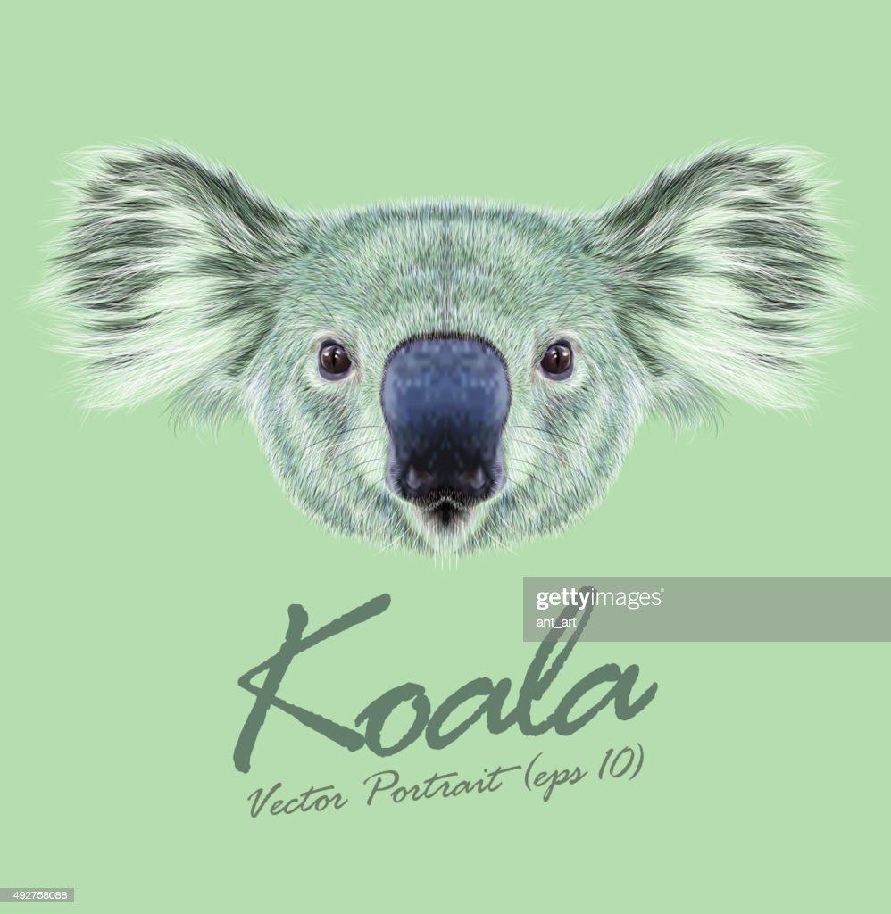 Vector Illustrative Portrait of Koala Bear