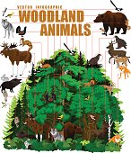 vector infographic - north woodland forest with animals