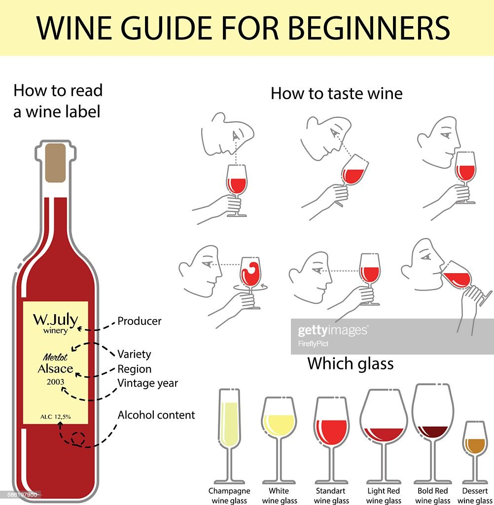 Vector infographic of wine tasting guide for beginners