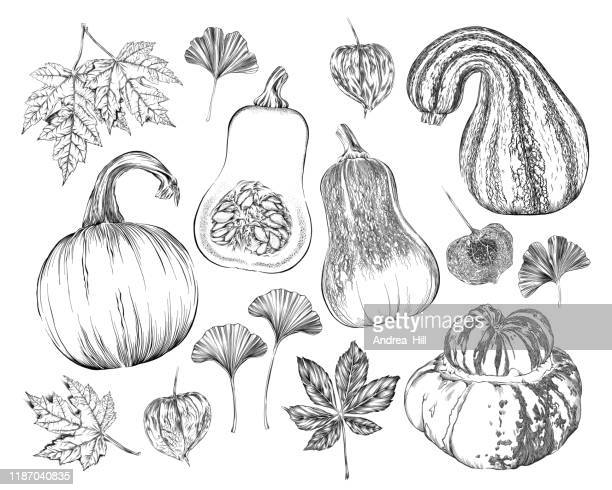 vector ink drawing of fall pumpkins, squash, leaves, vines and more - black and white food stock illustrations