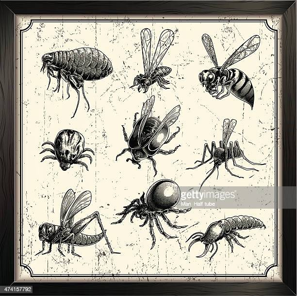vector insects - bumblebee stock illustrations, clip art, cartoons, & icons