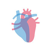 Vector isolated illustration of heart