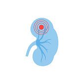 Vector isolated illustration of kidney