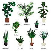 Vector isolated set various indoor ornamental plants with names. Most common and popular houseplants
