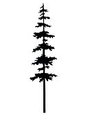 Vector isolated silhouette of a coniferous tree. Can be used in design, illustration, tattoo.