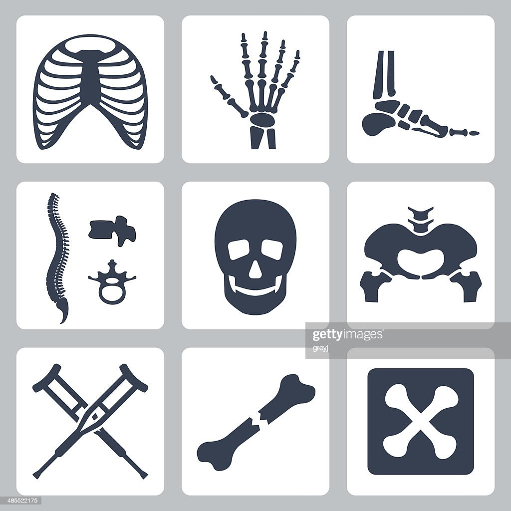 Vector isolated skeleton icons set
