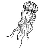 Vector Jellyfish for tattoo design in boho, hipster st