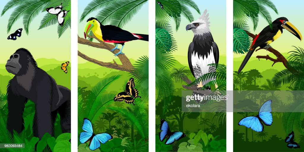 Vector Jungle rainforest vertical baner with male gorilla, pale-mandibled aracari toucanet,  harpy eagle , rainbow-billed toucan and morpho butterflies