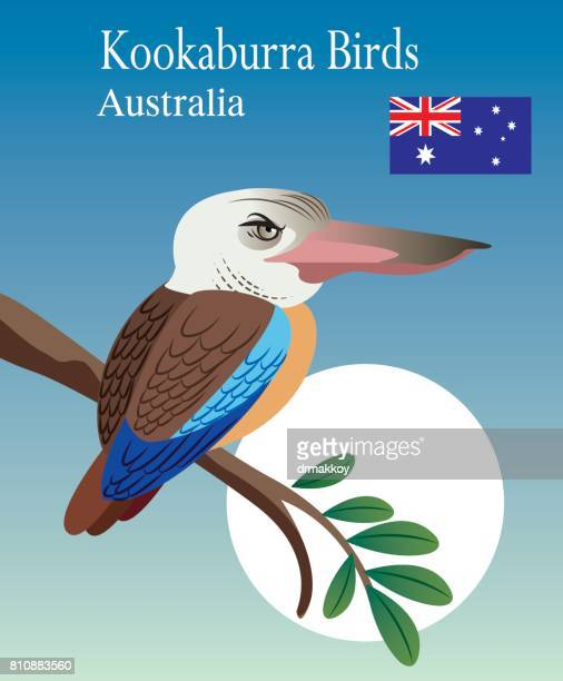 Vector Kookaburra Birds