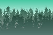 Vector landscape with green layered misty coniferous forest.