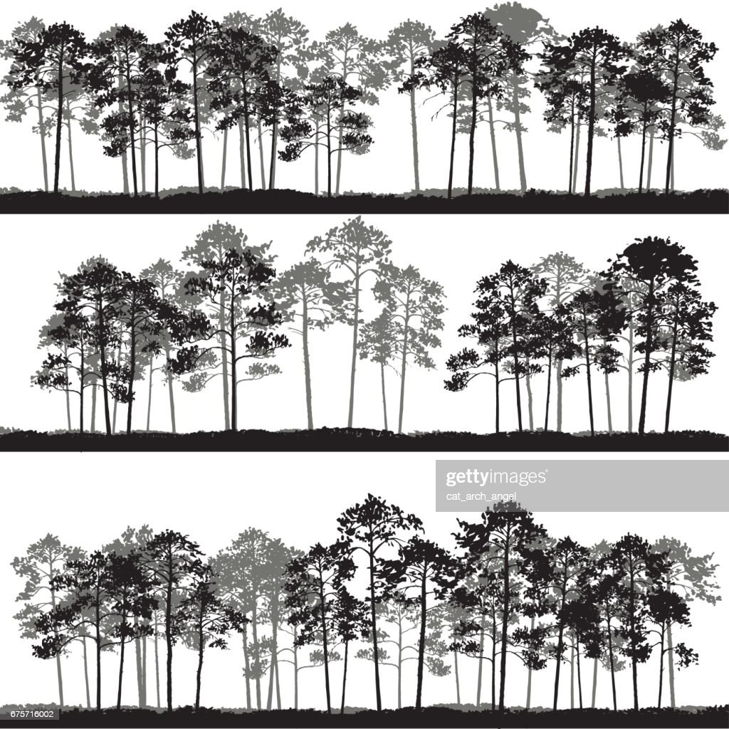 vector landscapes with pine trees