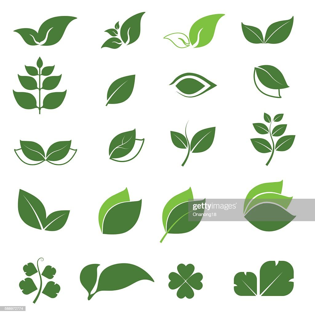 vector leaf icon