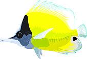 vector longnose butterflyfish