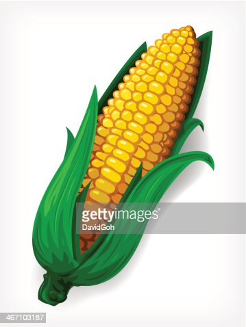 Vector maize vector art getty images voltagebd Image collections