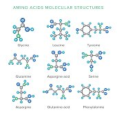 Vector molecular structures of amino acids isolated on white set