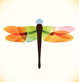 Vector multicolor isolated dragonfly  Beauty insect