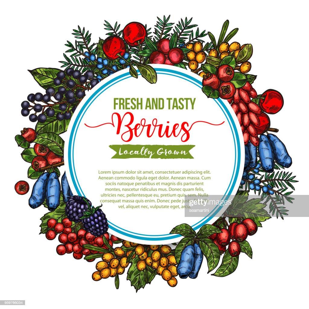 Vector natural fresh tasty berries sketch poster