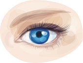 Vector of beautiful blue woman's eye.