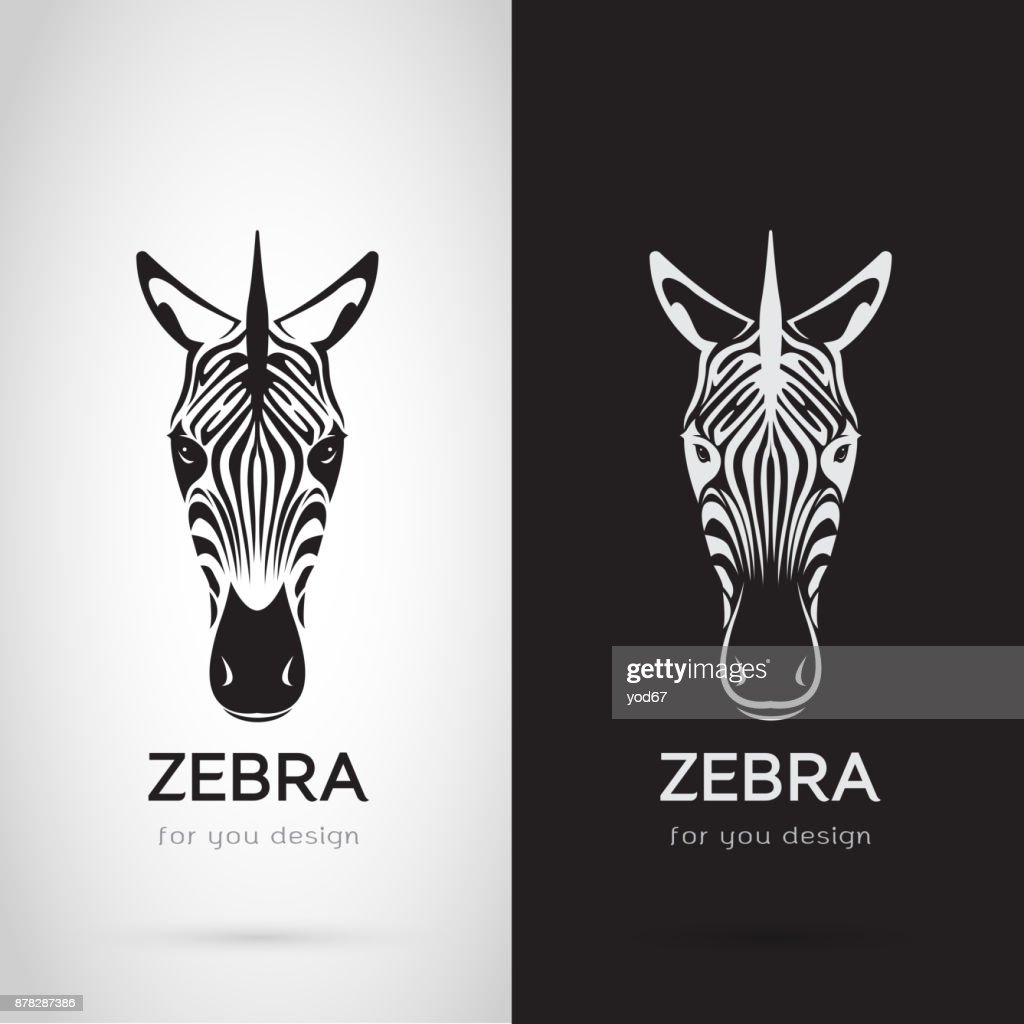 Vector of zebra head design on white background and black background