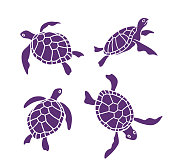 Vector ornamental ocean turtles on the white background. Design elements.