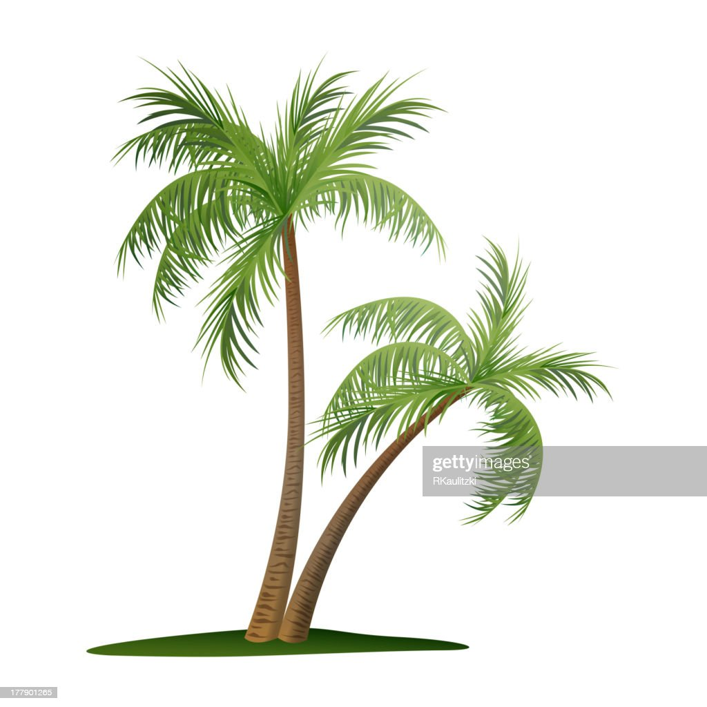 Vector palm trees illustration on white