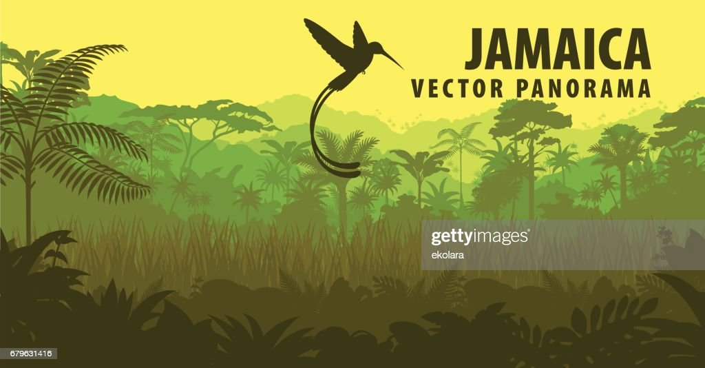 vector panorama of Jamaica with jungle and hummingbird