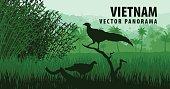 vector panorama of Vietnam with vietnamese pheasant in jungle rainforest