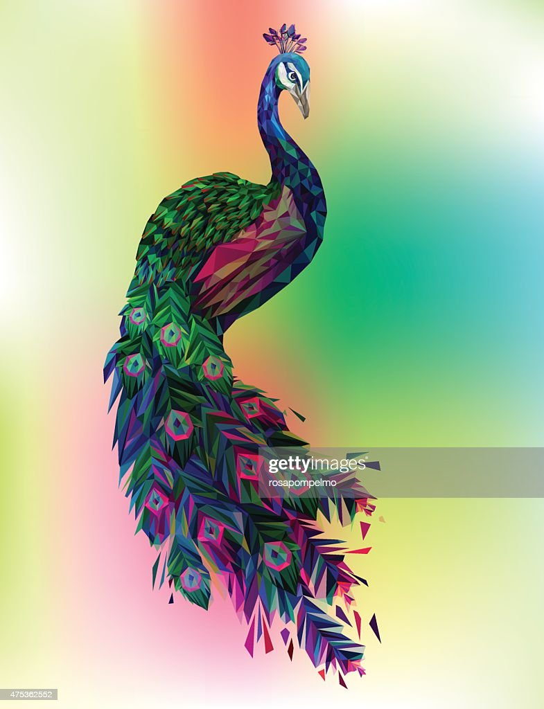 vector peacock, detailed stylized polygon illustration.