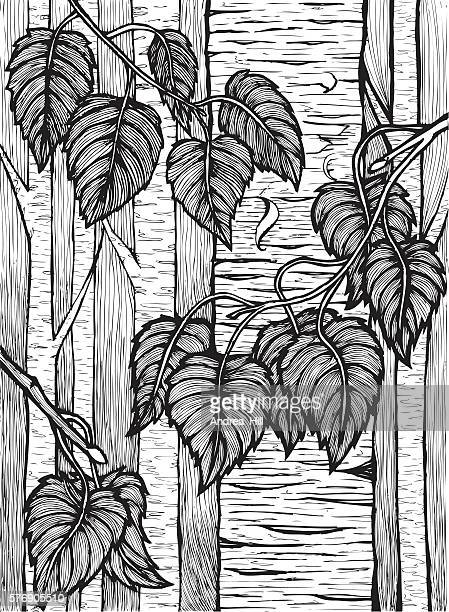 vector pen and ink drawing of birch trees - aspen tree stock illustrations, clip art, cartoons, & icons
